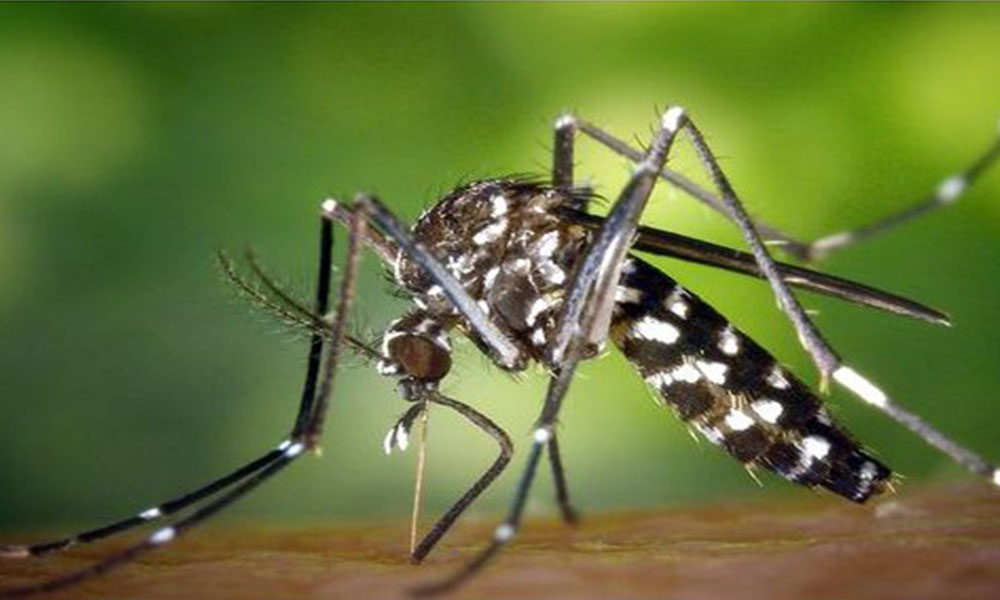 Alerta por chikunguña