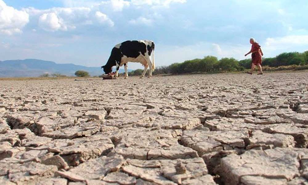 La peor sequía en 25 años daña medio millón de cultivos en Bolivia