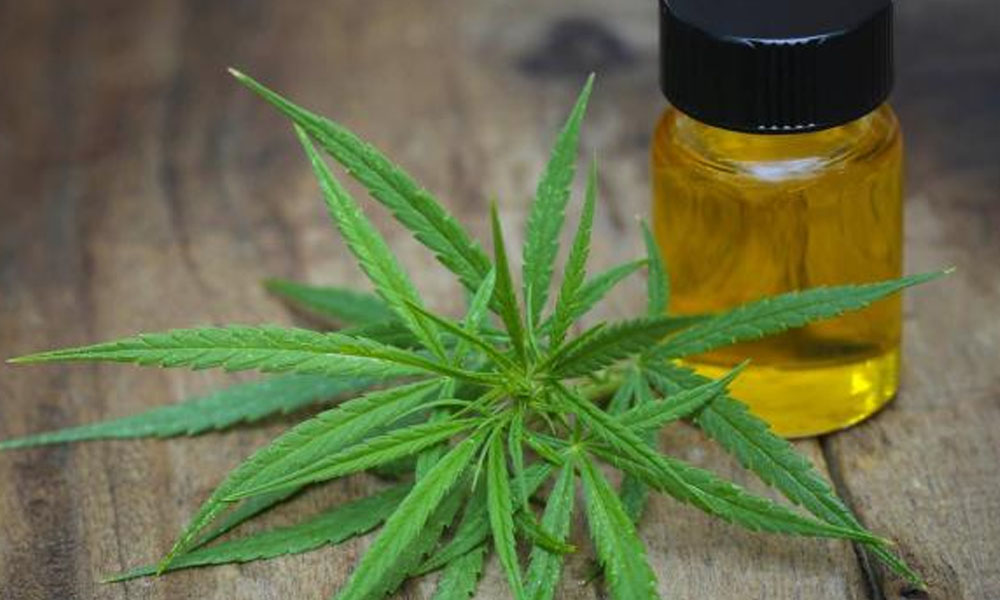 Cannabis medicinal, legal desde este viernes en Portugal